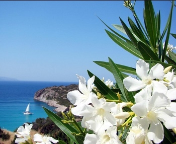 Seaside Neroli