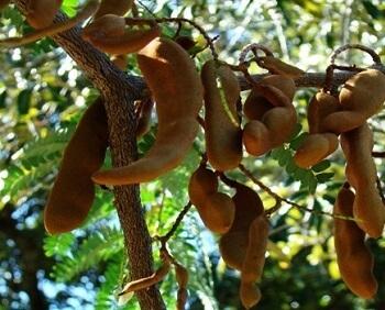 Tamarind & Stonefruit