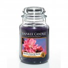 Yankee Candle Black Plum Blossom Geurkaars Large Jar Candle (150 branduren)